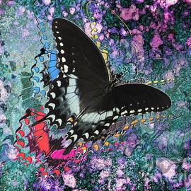 Black And White Butterfly by Anthony Ellis