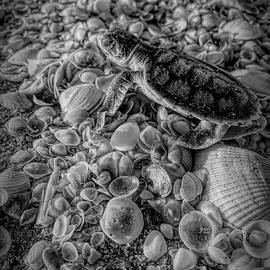 Black And White Flatback Turtle On Seashells by Joan Stratton