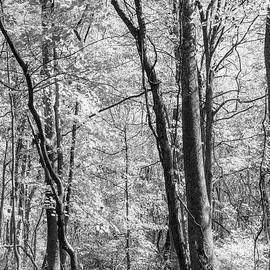 Black And White Nature by Denise Harty
