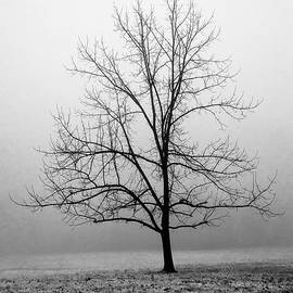 Black And White Winter Tree by Denise Harty