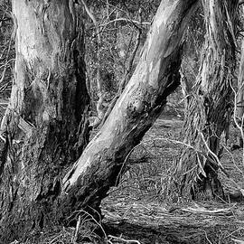Black and White Yellow Gums by Bette Devine