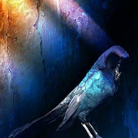 Black Bird Illuminati by Barbara Chichester
