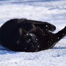 Black Cat, White Snow by Dana Hardy