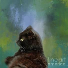 Black Cat2 by Eva Lechner