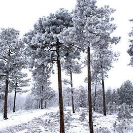 Black Forest, Colorado by Steffani GreenLeaf