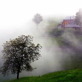 Black Forest in Spring by Angelika Vogel
