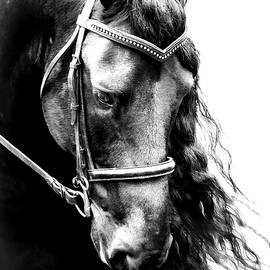 Black Friesian Horse Headshot II by Athena Mckinzie