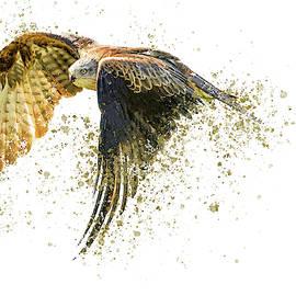 Black Kite Splatter by Darren Wilkes