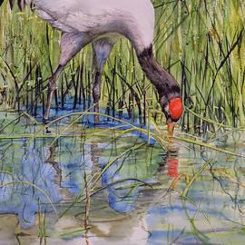 Black-Necked Crane by Vicky Lilla