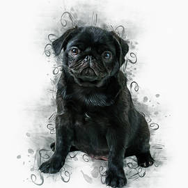 Black Pug by Ian Mitchell