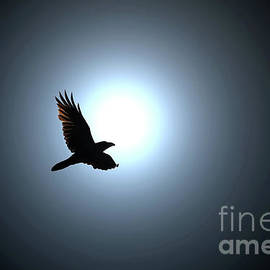 Black Raven Flies against Full Moon by Taina Sohlman