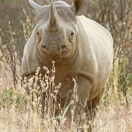 Black Rhino by MaryJane Sesto