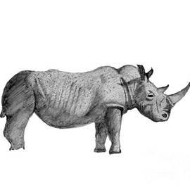 Black Rhino by Stephen Brooks