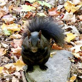 Black Squirrel by Stephanie Moore
