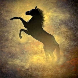 Black Stallion by Brian Wallace
