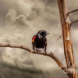 Blackbird Sing by Mitch Shindelbower