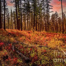Blazing Autumn Color by Mitch Shindelbower