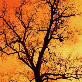 Blazing Sky by Richard Perry