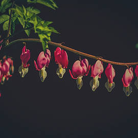 Bleeding Hearts Flowers by Mother Nature