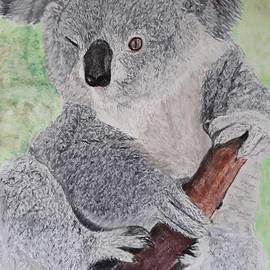 Blinking Koala by Cybele Chaves