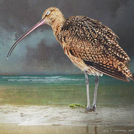 Blissful Curlew by R christopher Vest