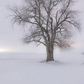 Blizzard  by Aaron J Groen