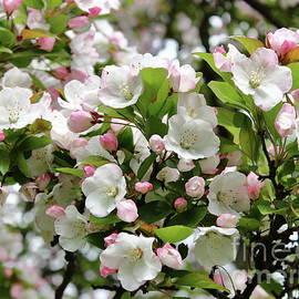 Bloom Heaven by Atiqur Rahman