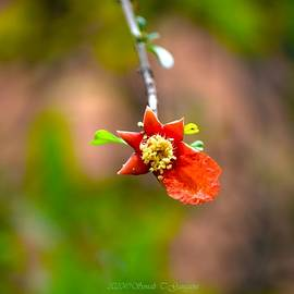 Blooming Fruition by Sonali Gangane