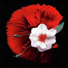 Wild Rose by Jacky Gerritsen
