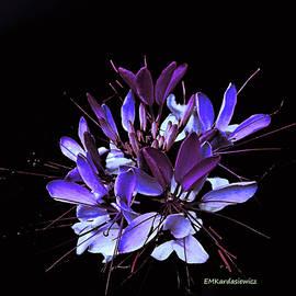 Blossom by Elizabeth Kardasiewicz