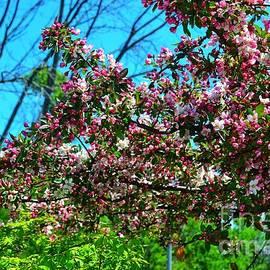 Blossoms of Spring  by Lisa Lindgren
