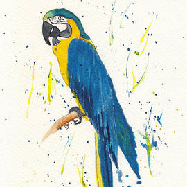 Blue and Gold Macaw by Conni Schaftenaar
