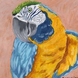 Blue and Gold Macaw by Katrina Gunn