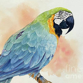 Blue and Yellow Macaw Bird by Hilda Vandergriff