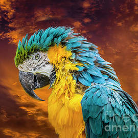 Blue And Yellow Macaw Portrait by Mitch Shindelbower