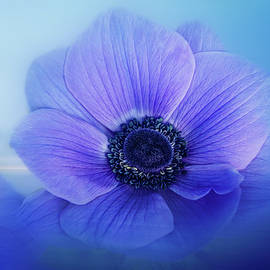 Blue Anemone Beauty by Terry Davis