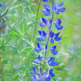 Blue Bellflower painting by Helen Filatova