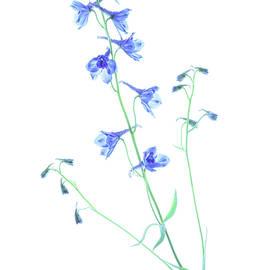 Blue Bells by Sandi Kroll
