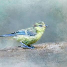 Blue Bird Chick by Terry Davis