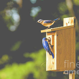 Blue Birds by Alana Ranney