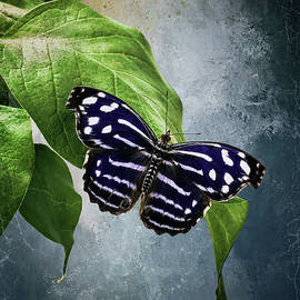 Blue Butterfly by Anita Hubbard