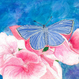 Blue butterfly by Susie Newman