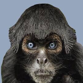 Blue-eyed Monkey  by Chante Moody