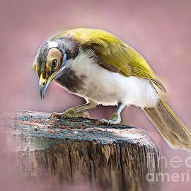 Blue Faced Honey Eater  by Trudee Hunter