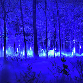Blue Glow in the Misty Winter Woods 001 by Lance Vaughn