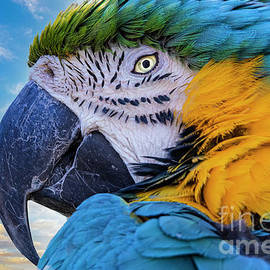 Blue-Green Macaw Parrot by Mitch Shindelbower