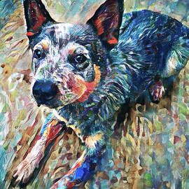 Blue Heeler - Australian Cattle Dog Art by Peggy Collins