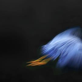 Blue Heron by Angelika Vogel