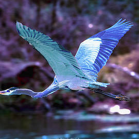 Blue Heron Aragon Mill Pond Georgia by Gary Shindelbower