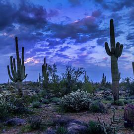 Blue Hour In The Desert by Lorraine Baum